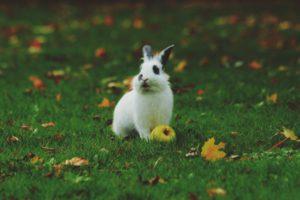 rabbit in grassy field